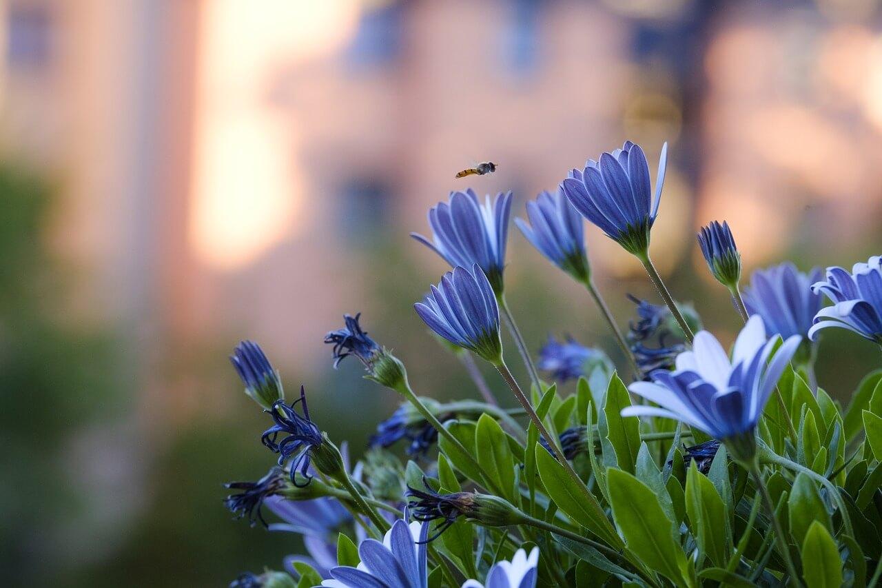 Kwiaty Balkonowe I Ogrodowe Gethome Pl